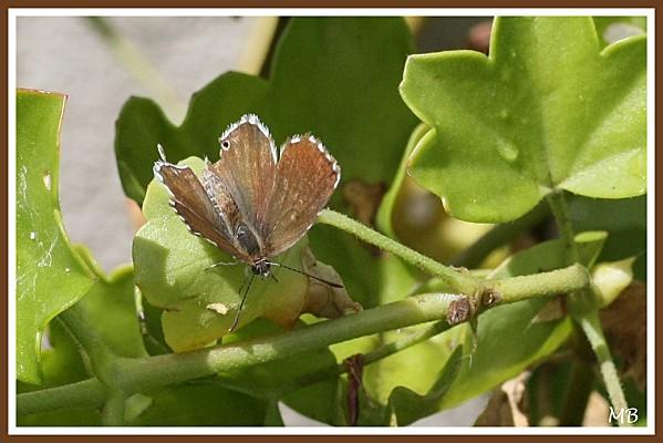 Insectes 01 3224a
