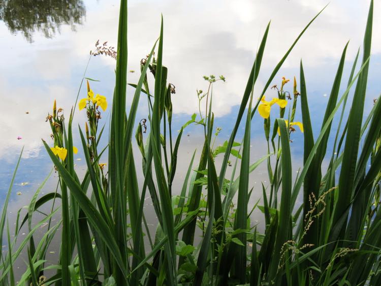 Le Blavet : Du Guern à Rimaison d'écluses en écluses