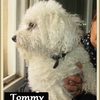 Tommy B  2 (1)