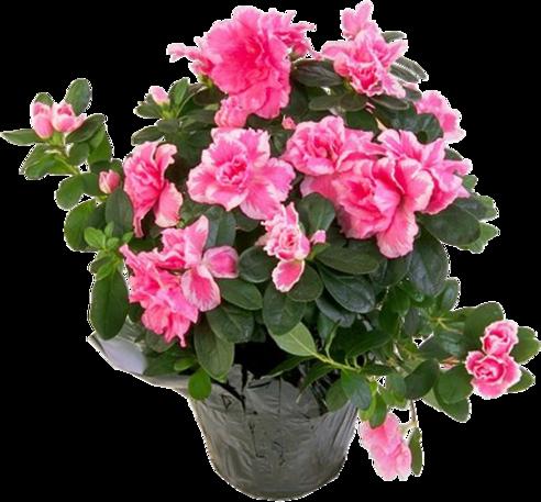 Fleurs en Pôts