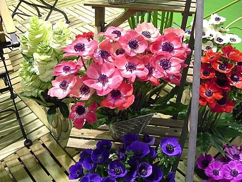 Orchidees-014.jpg