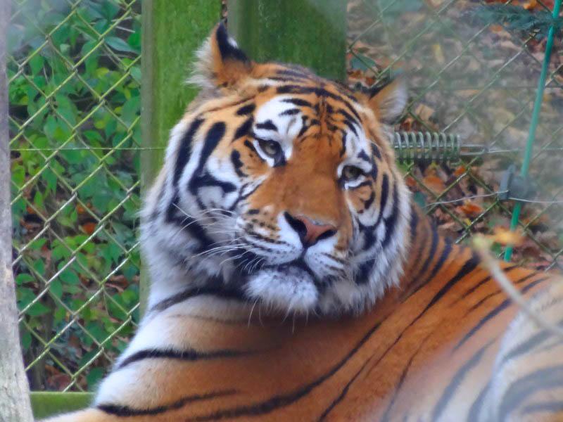 zoo mulhouse ulis lutterbach