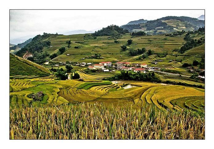 Une rizière par jour 18