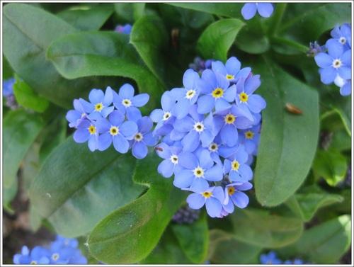 Défi de juin : la couleur bleue
