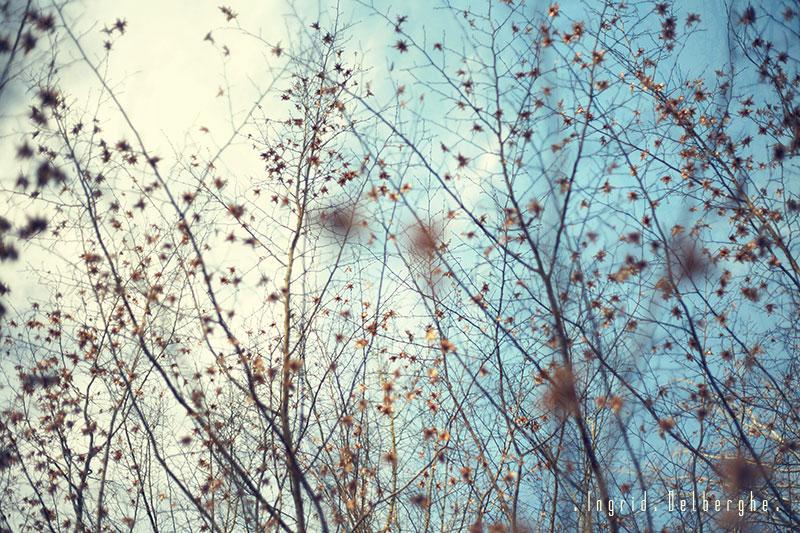 Jour 12 - L' hiver c'est beau