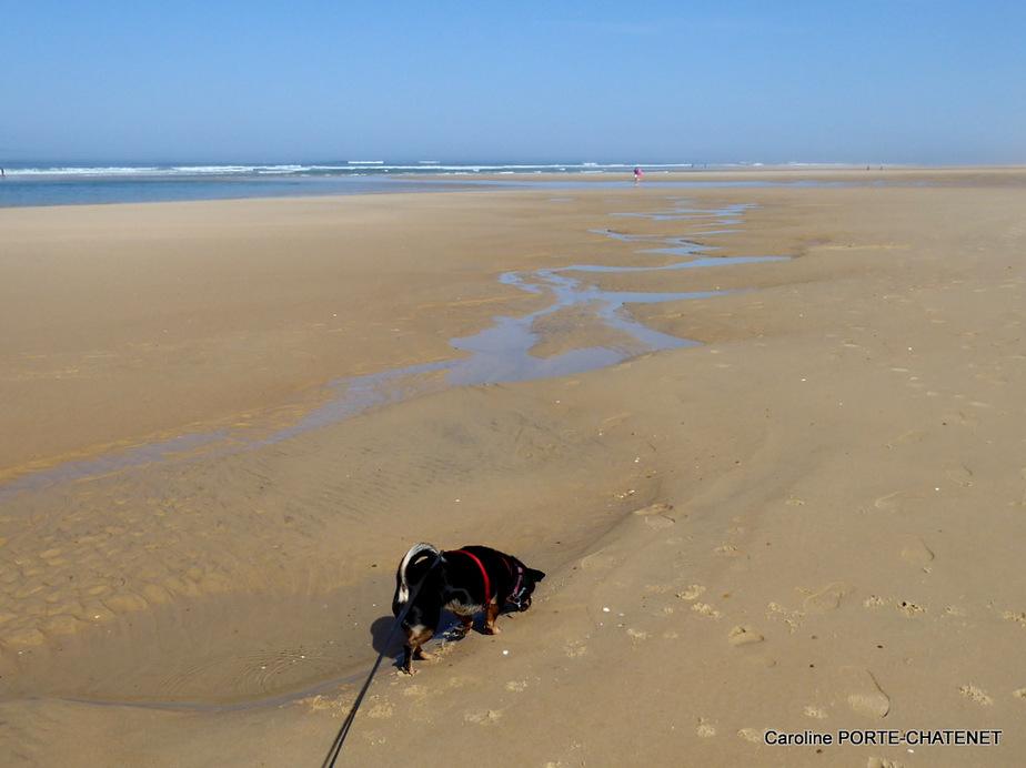 *Le sable de la plage emporté...*