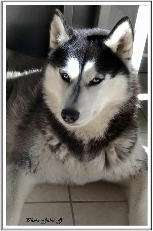 Taïka (2 ans)
