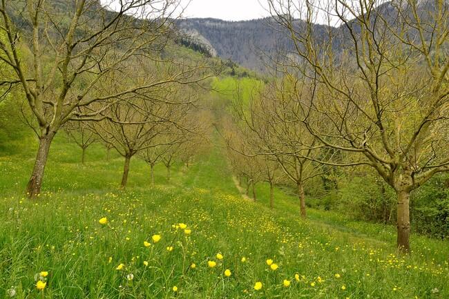 2014.04.20 Route fleurie (Drôme, Rhone-Alpes)
