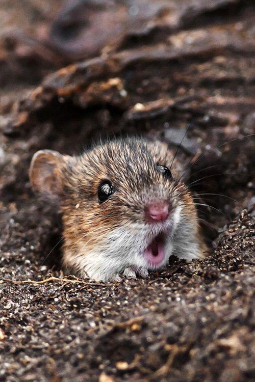 Petits ratons !