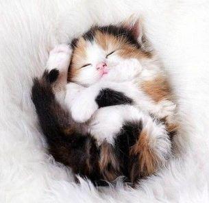 So cosy: