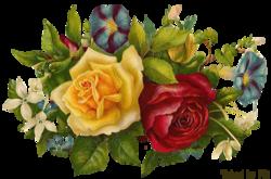 Tube Roses vintage