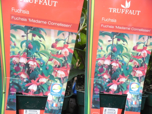 Encore une petite visite chez Truffaut !