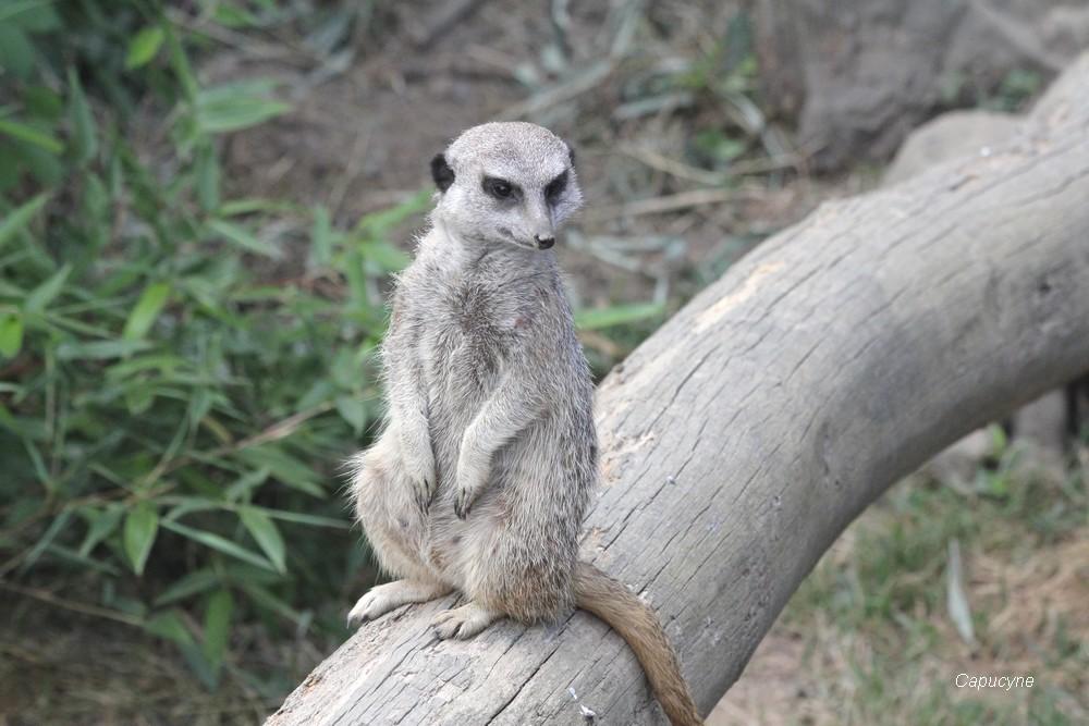 Zoo de la Boissière du Doré - 2