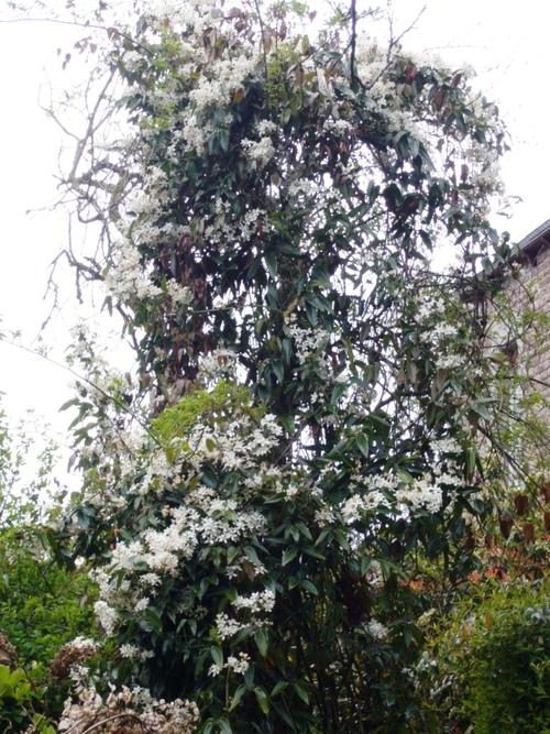 Dans mon jardin en mars