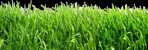 Verdure - Plantes Vertes Série 13
