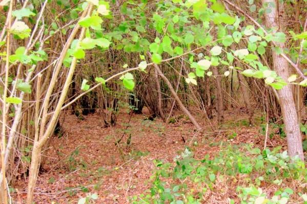 T05 - Sous les feuilles