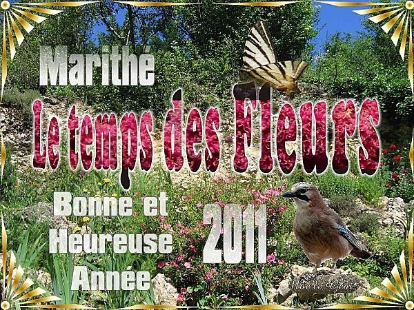 B_Annee_2011_Le_T_des_Fleurs.jpg