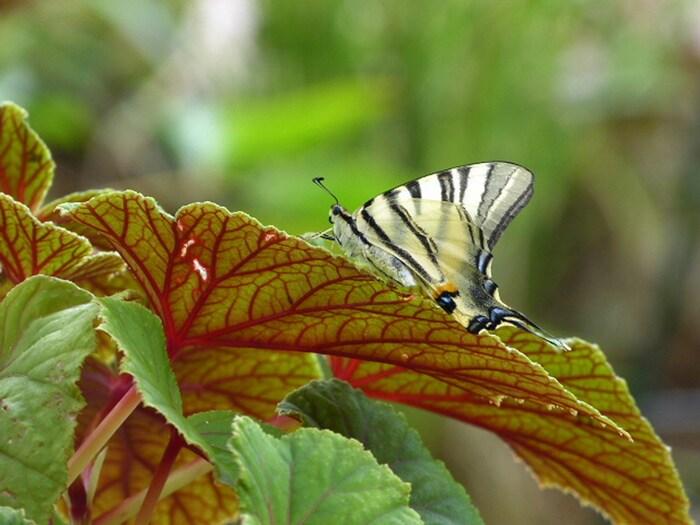 Un papillon s'est posé ...