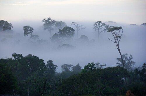 En Amazonie les arbres capables de faire tomber la pluie