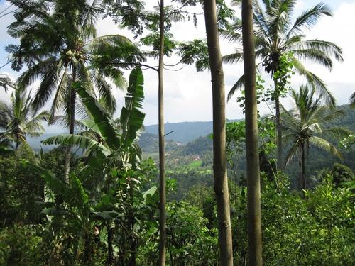 Munduk, ile de Bali