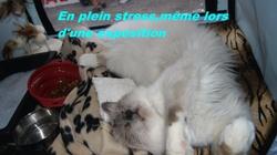 Ch. Fun Chatterley D'Armenon