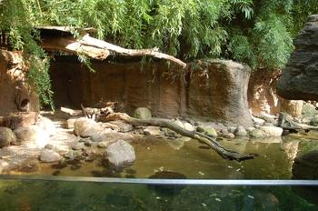 dierenpark emmen d50 097