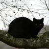 Un chat sur la branche
