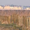 Hibou des marais (Baie de Somme, 8 mars 2015) © Jean-Luc Déniel