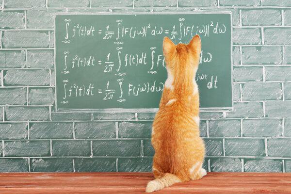 Nous n'avons pas encore exploré toutes les capacités intellectuelles des chats. © Kisialiou Yury, Shutterstock