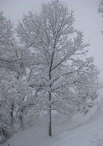 arbre neige