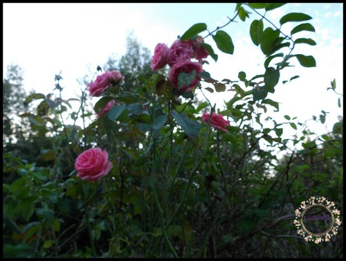 des nouvelles du jardin