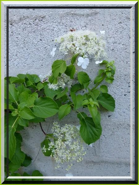 Des fleurs encadrées