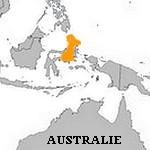 Hemiscyllium Halmahera