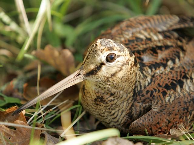Noms d 39 oiseaux fleur de rocaille for Oiseau a long bec