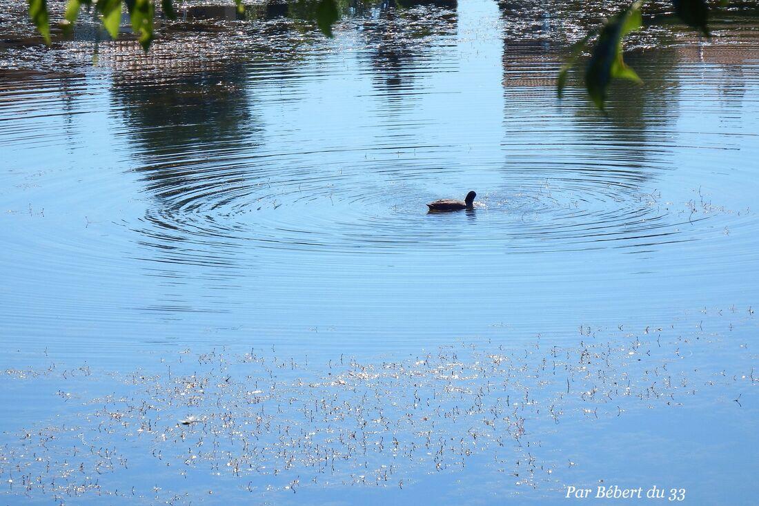 des ronds dans l'eau !