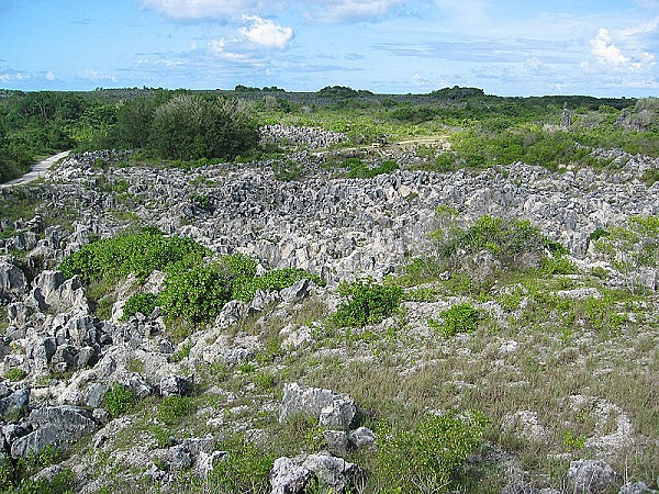 800px-Coral_pinacles_on_Nauru.jpg