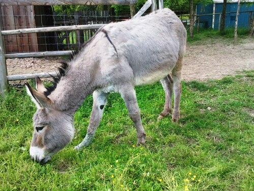 Les ânes, en famille  Alsace
