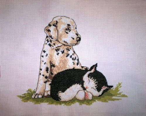 chaton et chiot