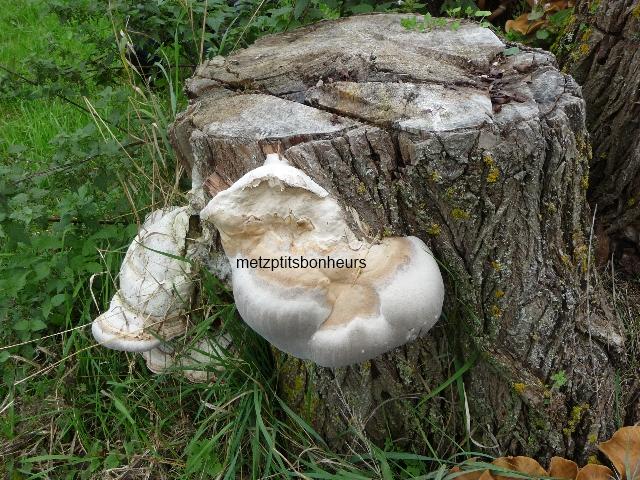 Bons, pas bons mes champignons?