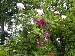 Le jardin de la rue du Lin
