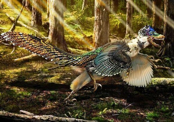 Sur cette représentation d'artiste, Zhenyuanlong suni est couvert de plumes richement colorées. L'hypothèse est plausible car ce dinosaure ne devait pas s'en servir pour voler mais, sans doute, pour parader. Ces ailes l'aidaient peut-être aussi à chasser en courant après ses proies. © Zhao Chuang