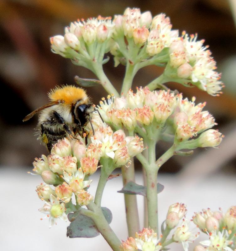 insectes du jardin photos