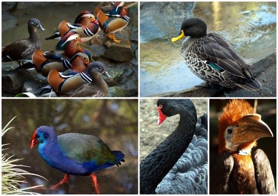 monde des oiseaux1