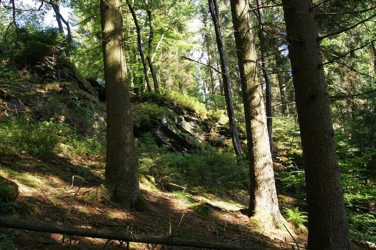 Ardennes- forêt de Château-Regnault