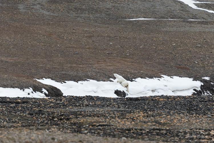 Récit de voyage - Edgeøya