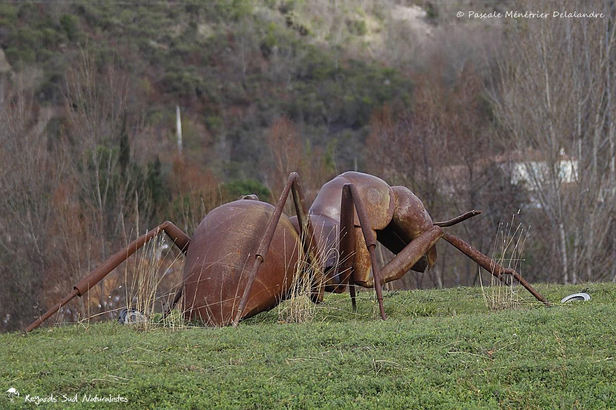 Les fourmis géantes de Bédarieux