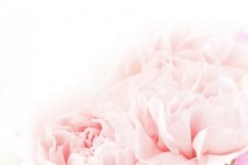 20 Fleurs comestibles au jardin