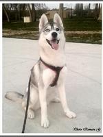 Leska (1 an)