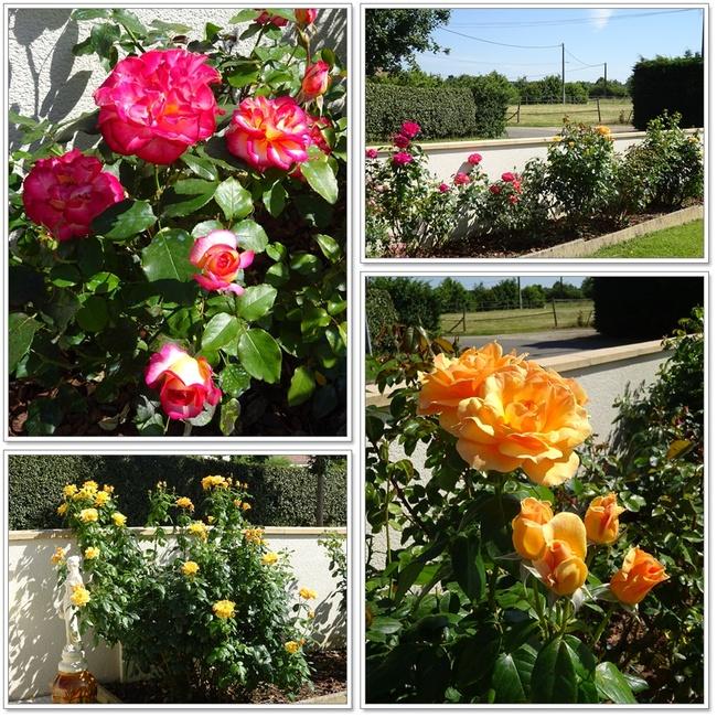 Des roses pour les mamans