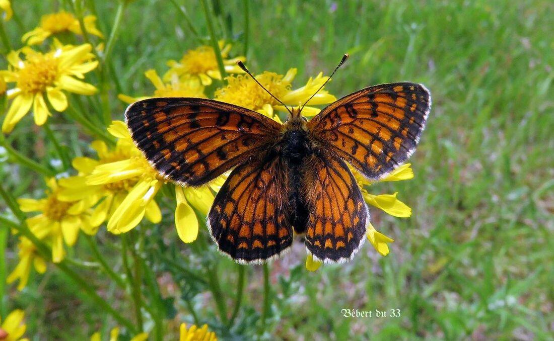un papillon sur les fleurs
